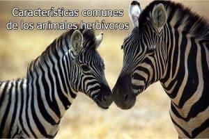 Características comunes de los animales herbívoros